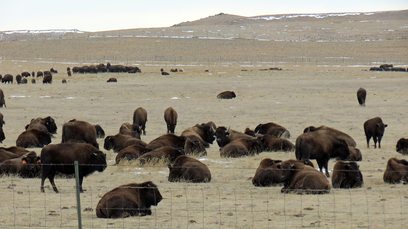 We were passing by the Durham Bison Ranch in Wright, Wyoming.