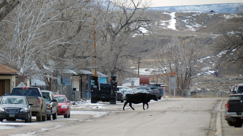 """We continued onward to Wright, Wyoming and turned right onto State Route 387.  Our next stop was the town of Midwest, Wyoming.  I was pulling into a convenience store for a fuel stop when Heather directed my attention to a nearby """"cattle drive."""""""