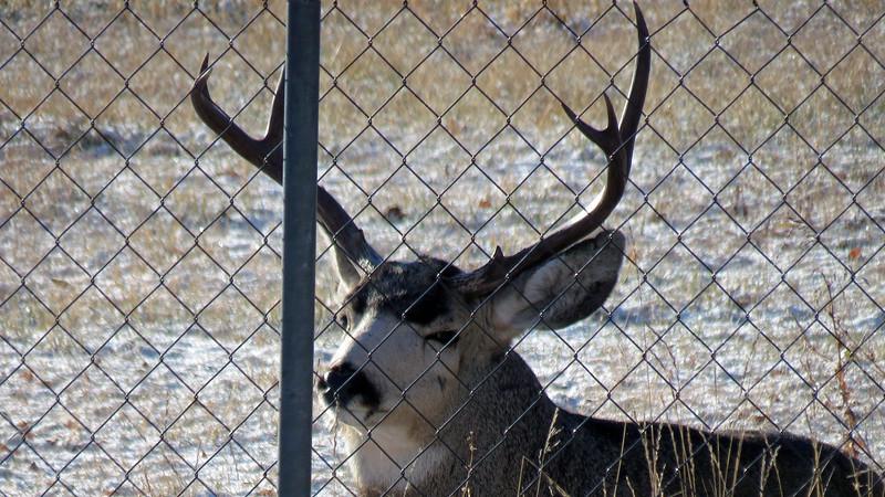 Deer is not amused, apparently.