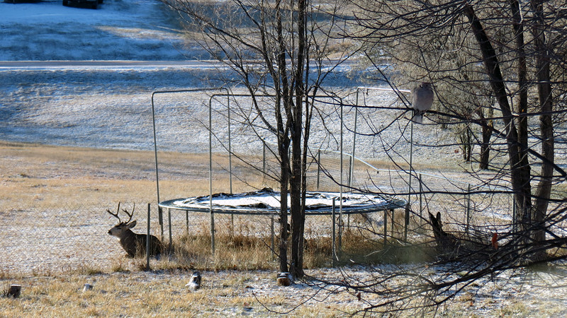 Just across the fence in her neighbor's yard was a group of deer hanging out.