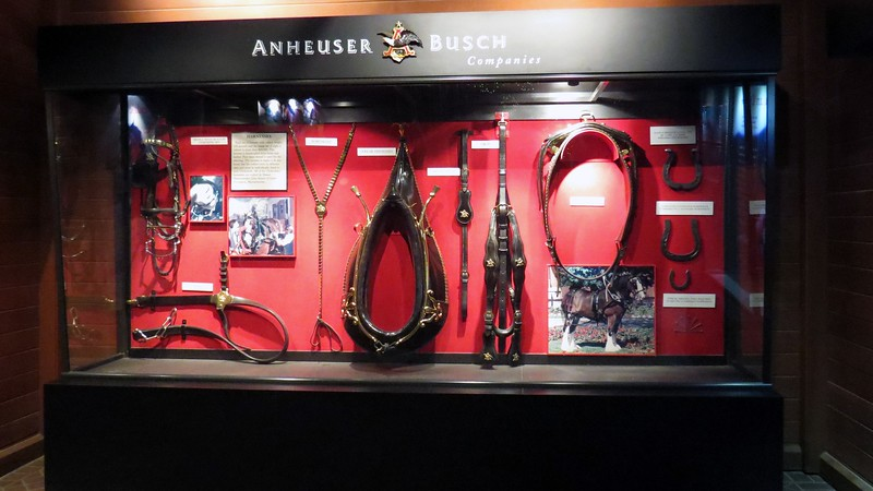 A display case greets visitors to the stables.  On display are several items from the Clydesdale team's 80 year history, such as a hand-crafted harness and collar.