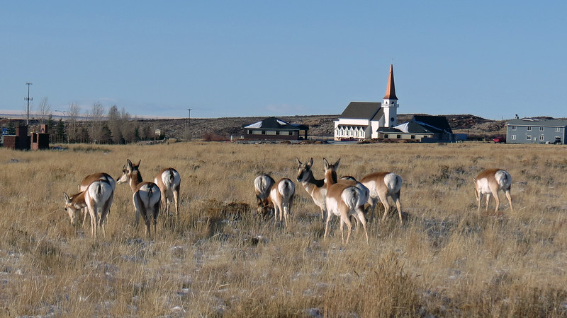 Heather tells me that antelope are quite common in this area.
