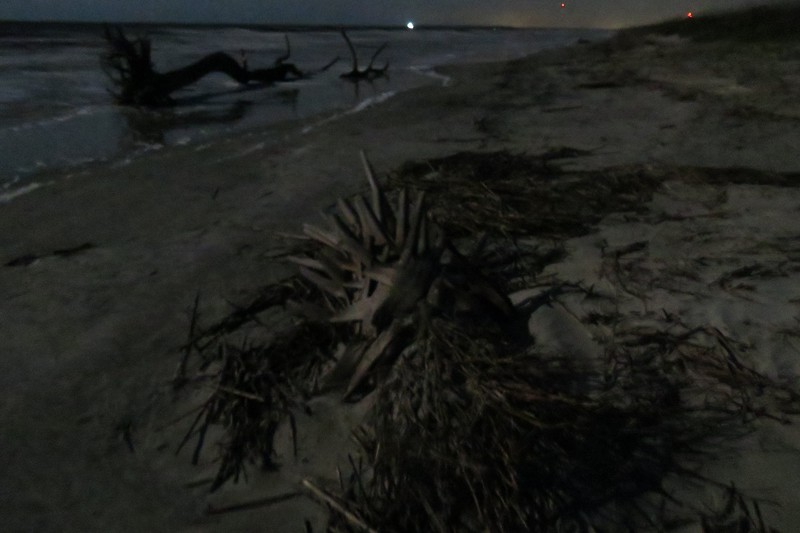 Along with the dead tree, I found part of a palm tree in the area as well.