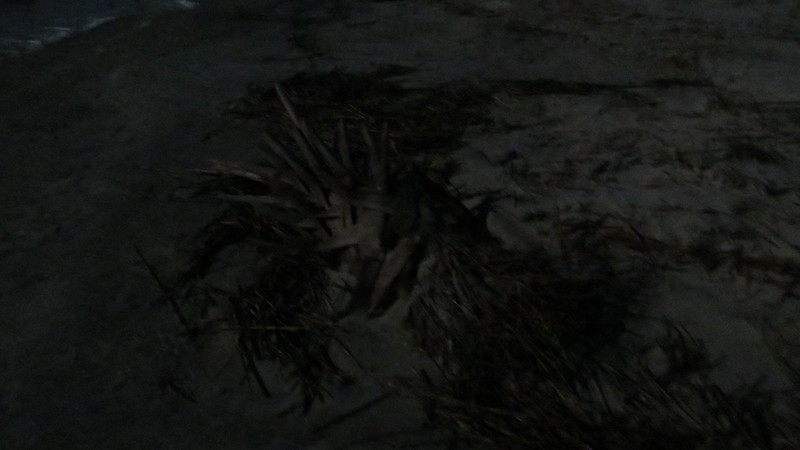 Part of a dead palm tree on the beach.