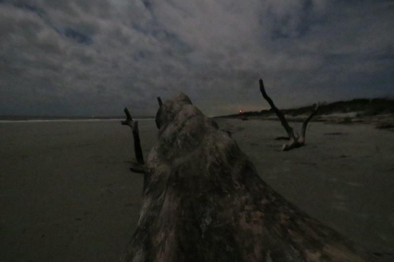 I put the camera on a level spot on the dead tree and tried to focus on the tree, itself.  The result was encouraging.