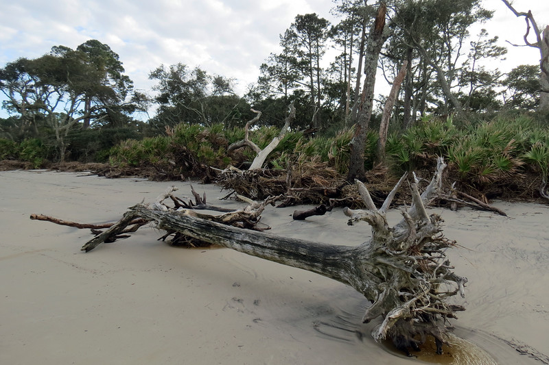 """While this location was beautiful, it isn't the exact location of what everyone knows as """"Driftwood Beach."""""""