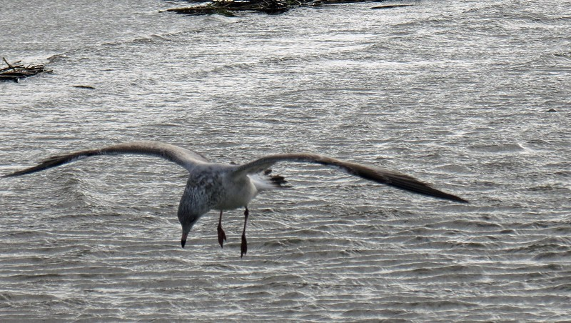 I managed to get a good shot of someone coming in for a landing.
