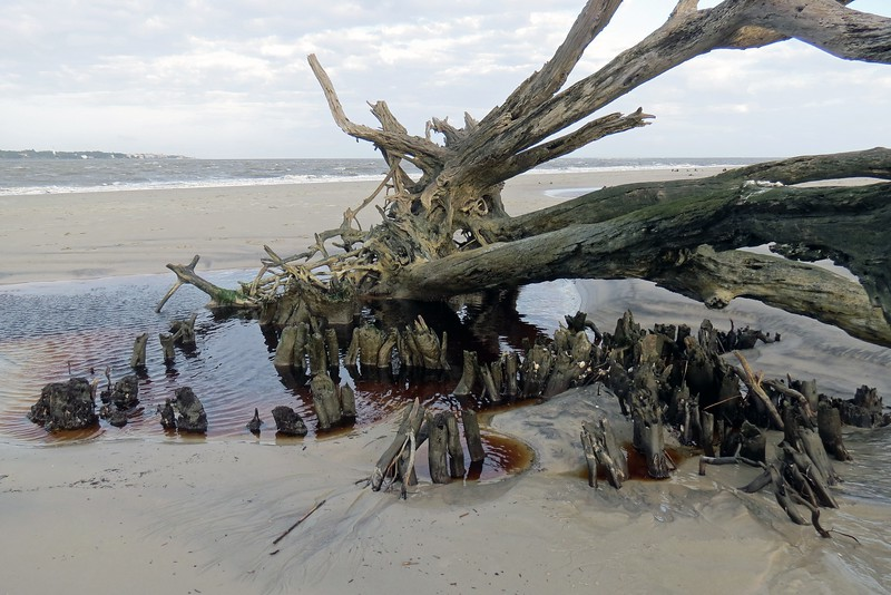 But as I researched Driftwood Beach further, I discovered that the picturesque tree graveyard that is the most photographed location on the island is actually much closer to the Villas By the Sea Resort than where I was today.