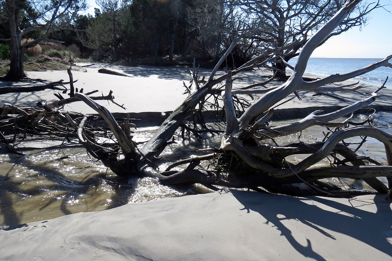 I was thankful for the dead tree straddling across the small creek.