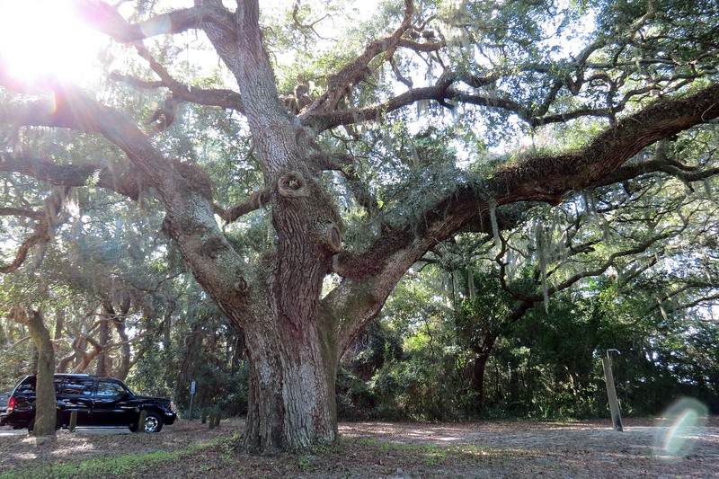 I also love the fact that they left all the giant Southern Live Oak trees in place.