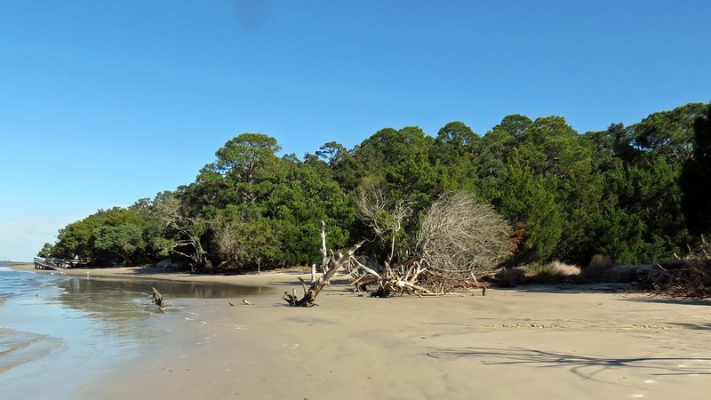 Many trees have fallen over along the beaches all over the island.
