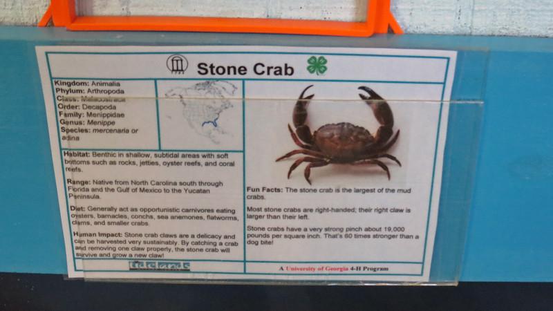 Stone Crab.