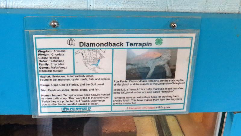 Diamondback Terrapin.