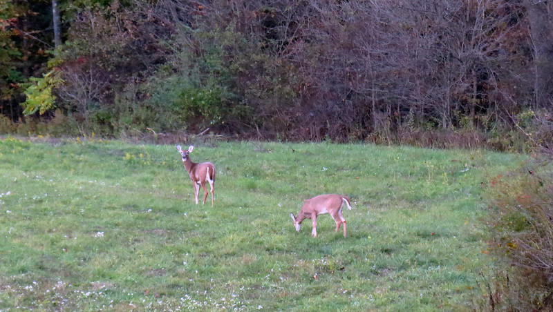 His only neighbors in that direction are the deer, and they're ok.