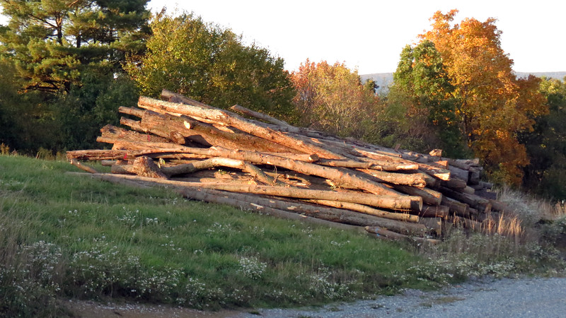 """We took a walk around the property which, at 55 nowhere-near-level acres, proved to be quite a workout.  """"I've got to get to work on the wood pile,"""" he tells me."""