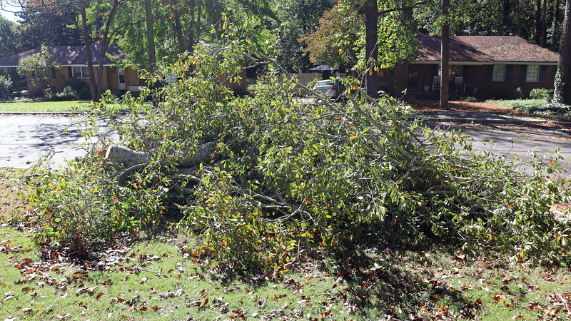 The oak tree fell across the driveway in front of the carport.  Neither Danita, nor her roommate were able to get out to go to work.  The tree had both cars blocked in.