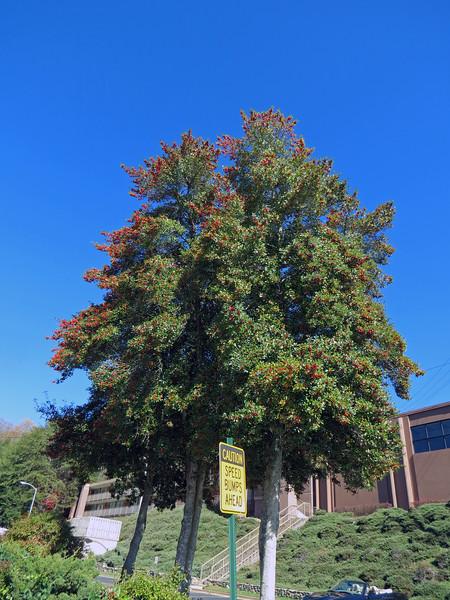 Trees in the Chestnut Tree Inn parking lot.