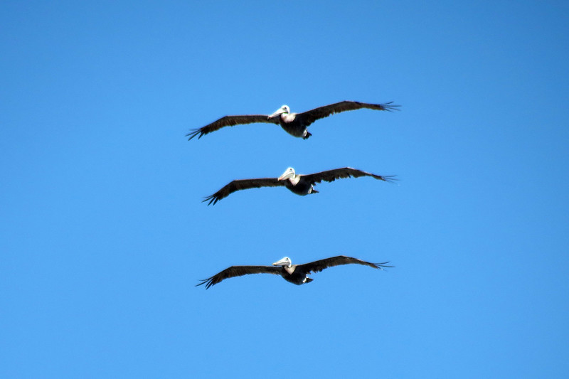 I somehow managed to capture these three guys in flight above me.