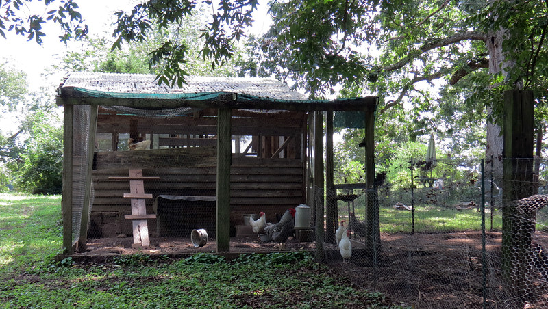 Chickens are kept on the property currently.