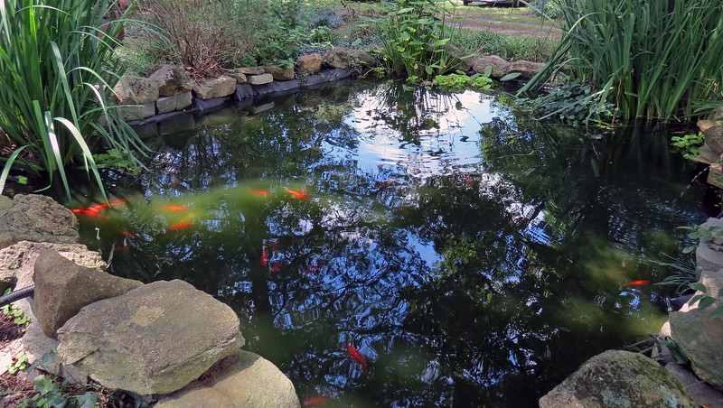 The current owner installed a fish pond.