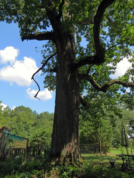 Today, the property occupies just over 4 acres, a lot of which are filled with giant old trees.