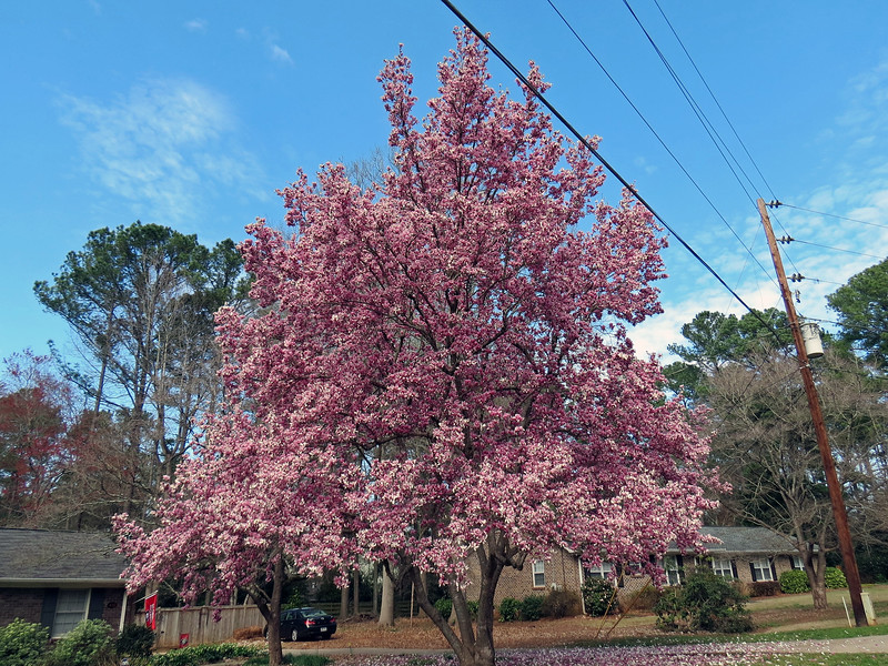 Spring is a wonderful time in northern Georgia !  This is the time when all of the flowering trees wake up for the season.  Today seemed like a good day to take the camera with me on a bike ride around the neighborhood to check out the spring colors.