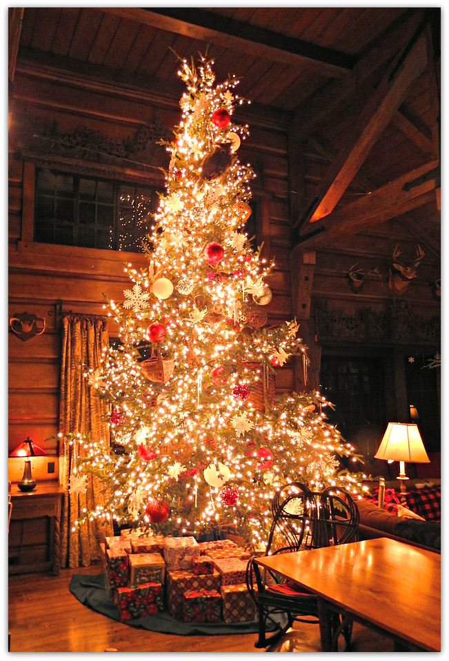Adirondacks Christmas Tree