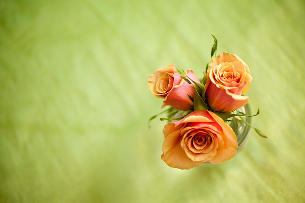 Oceania Orange Roses on Green