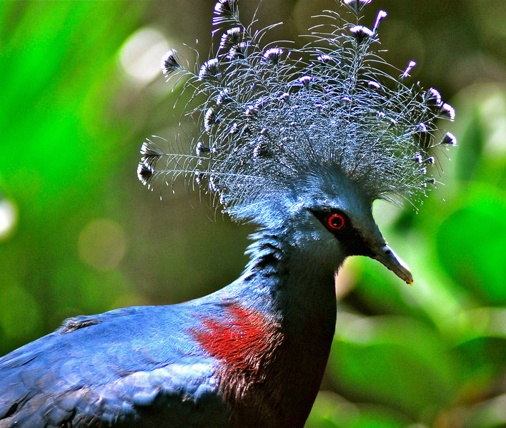 Crazy bird with a crazy hair style-Thomas<br /> Minnesota Zoo, 7-30-2012