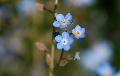 05252005 084603 CLOSER Macro Flowers (8)