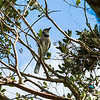 Bird_Pics-5