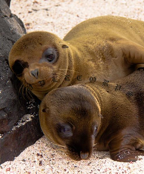 GalapagosDec2011-110(1)
