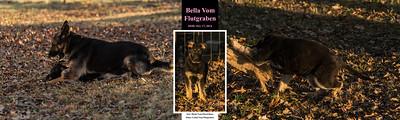 Bella Vom Flutgraben