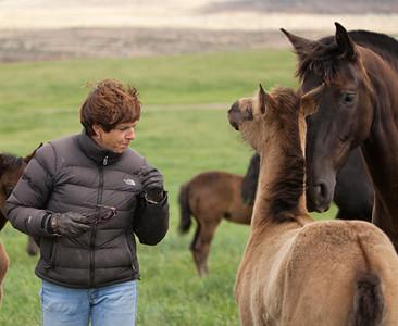 72ami&foal3389