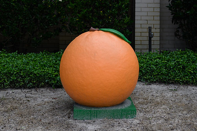 April 21, 2020-Oranges- the Record Newspapers-ND5_5831-