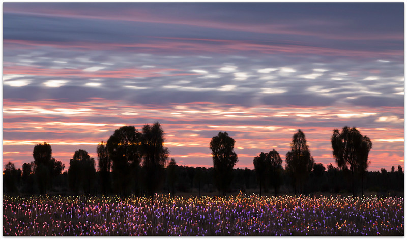 Field of lights  Uluru 2