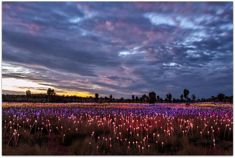 Field Of Lights Uluru 1