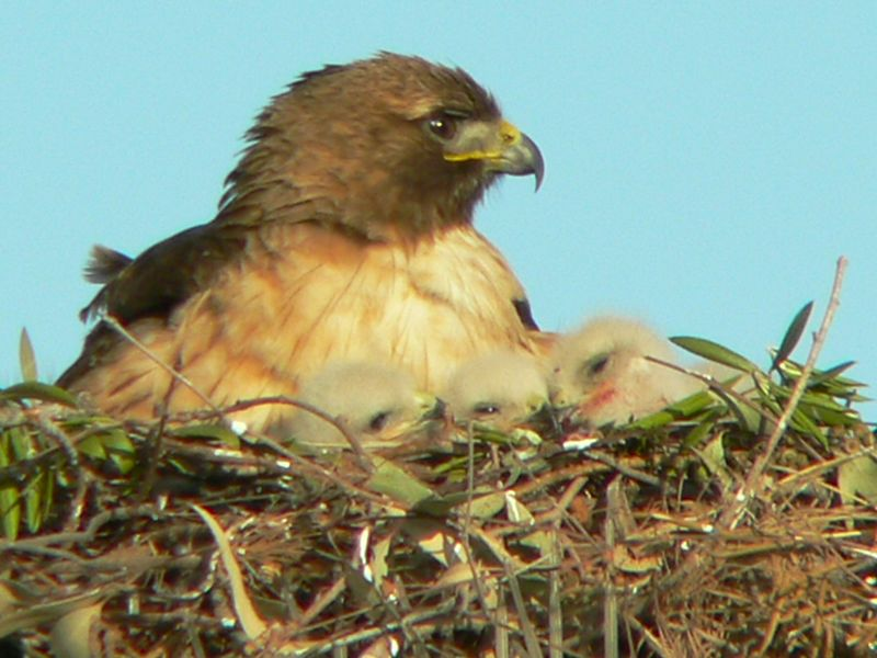 A Fierce Mother's Love....Taken around 6:15pm on April 22 after a feeding.