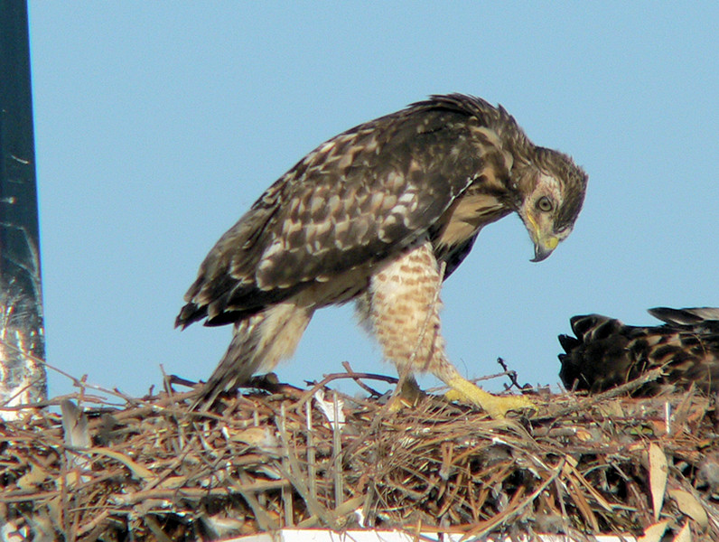 ...then you notice objects in the nest.  First you put your foot on it...