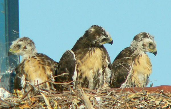 May 15 - May 21: The Road to Full- Fledging