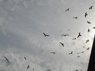 Gulls on the Redneck Riviera