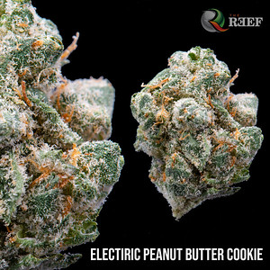 electric peanut butter cookie