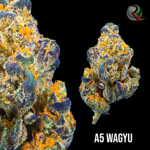 A5 Wagyu