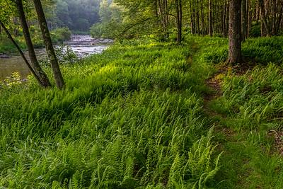 Blackwater River - Beall Tract