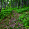 Hemlock Spur Trail