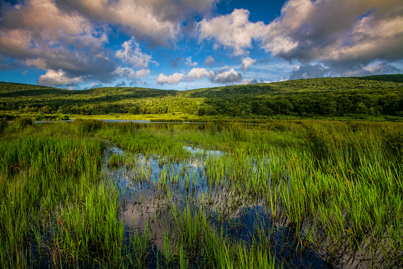 A-Frame Wetlands