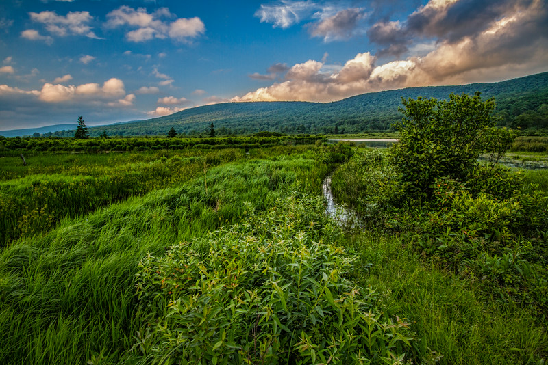 Wetlands Afternoon