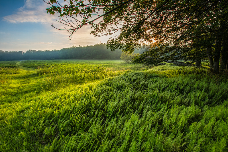 Beall Trail Sunrise