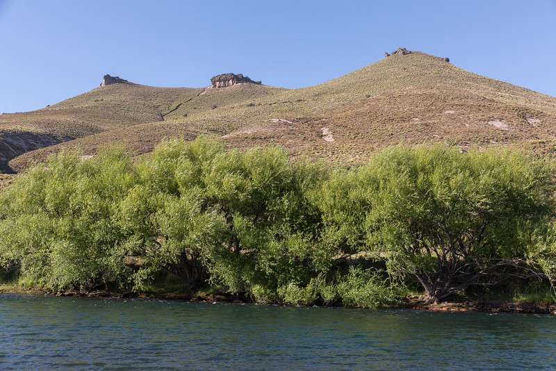 Chimehuin River Camping_N5A6347