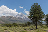 Lanin National Park Tom_N5A7060